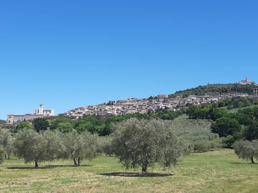 View of Assisi with olive groves