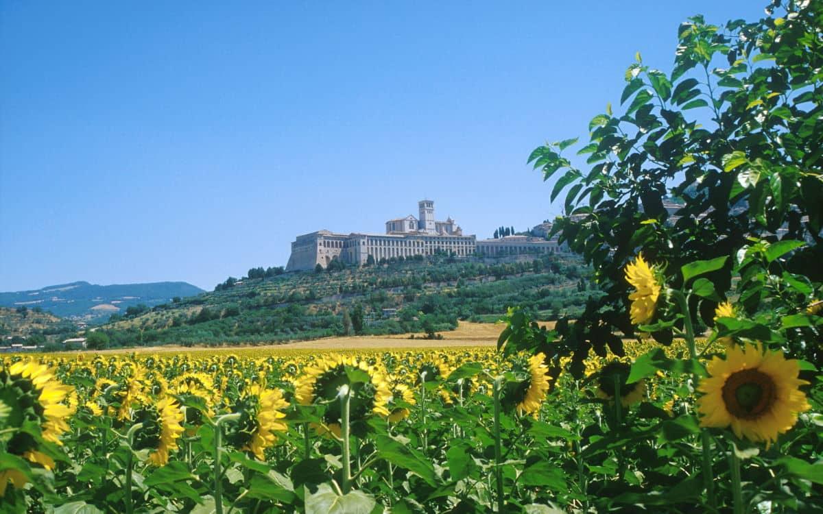 Basilica Saint Francis and Sunflowers