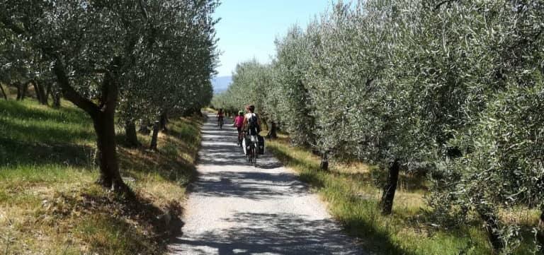 Via degli Olivi