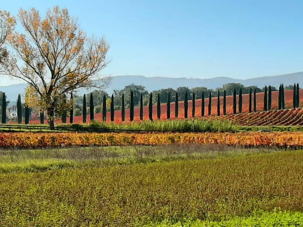 Wandelen en de wijn van Montefalco proeven