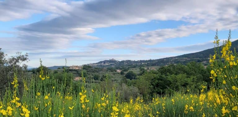 View of Assisi with broom