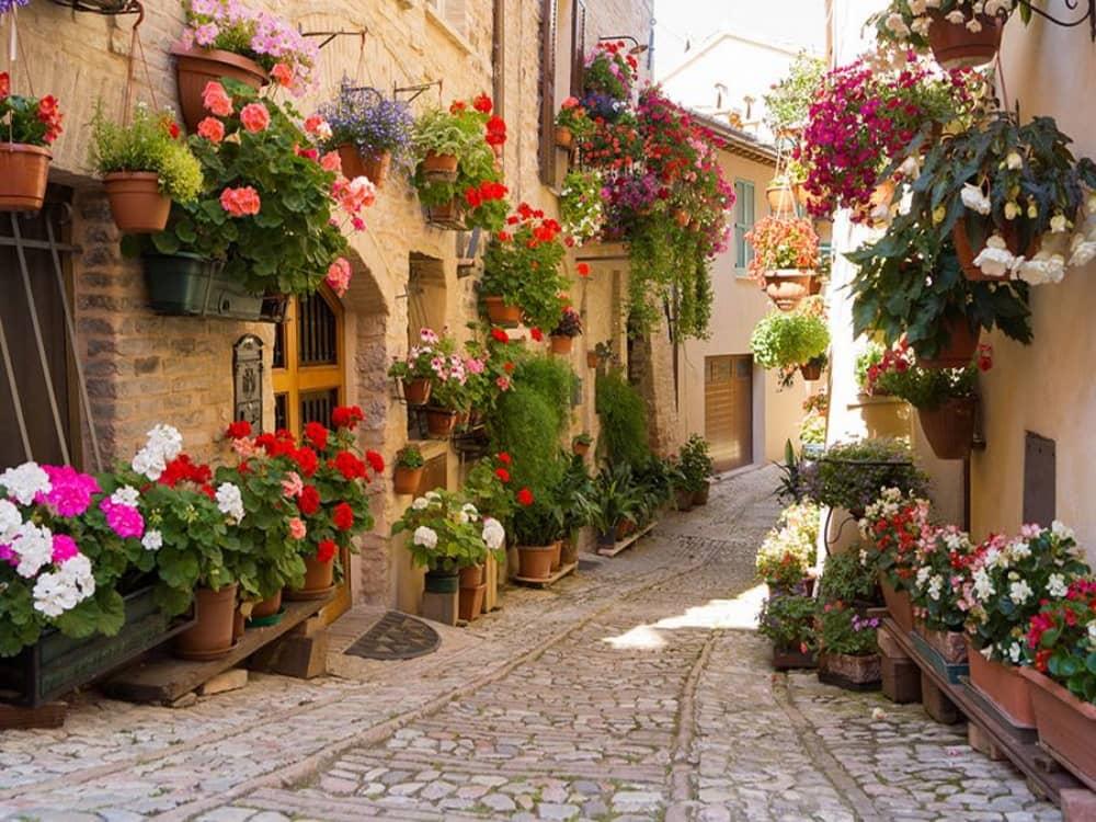 Flowered street in Spello